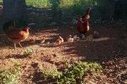 biodinamica agricoltura