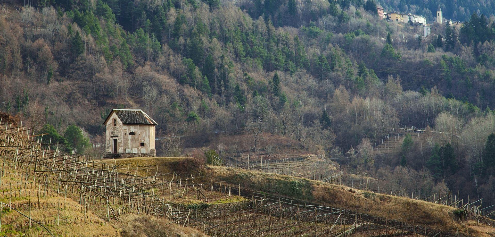 Coltivare erbe officinali in Trentino