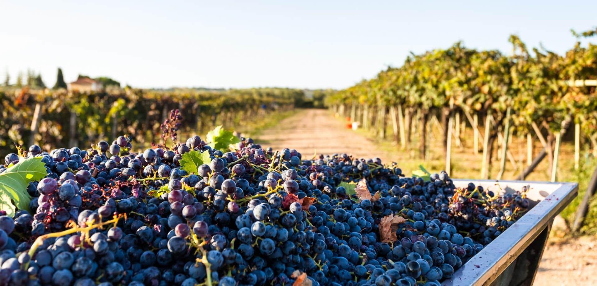 Corso di avvicinamento al vino pugliese