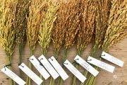 vercelli risaie