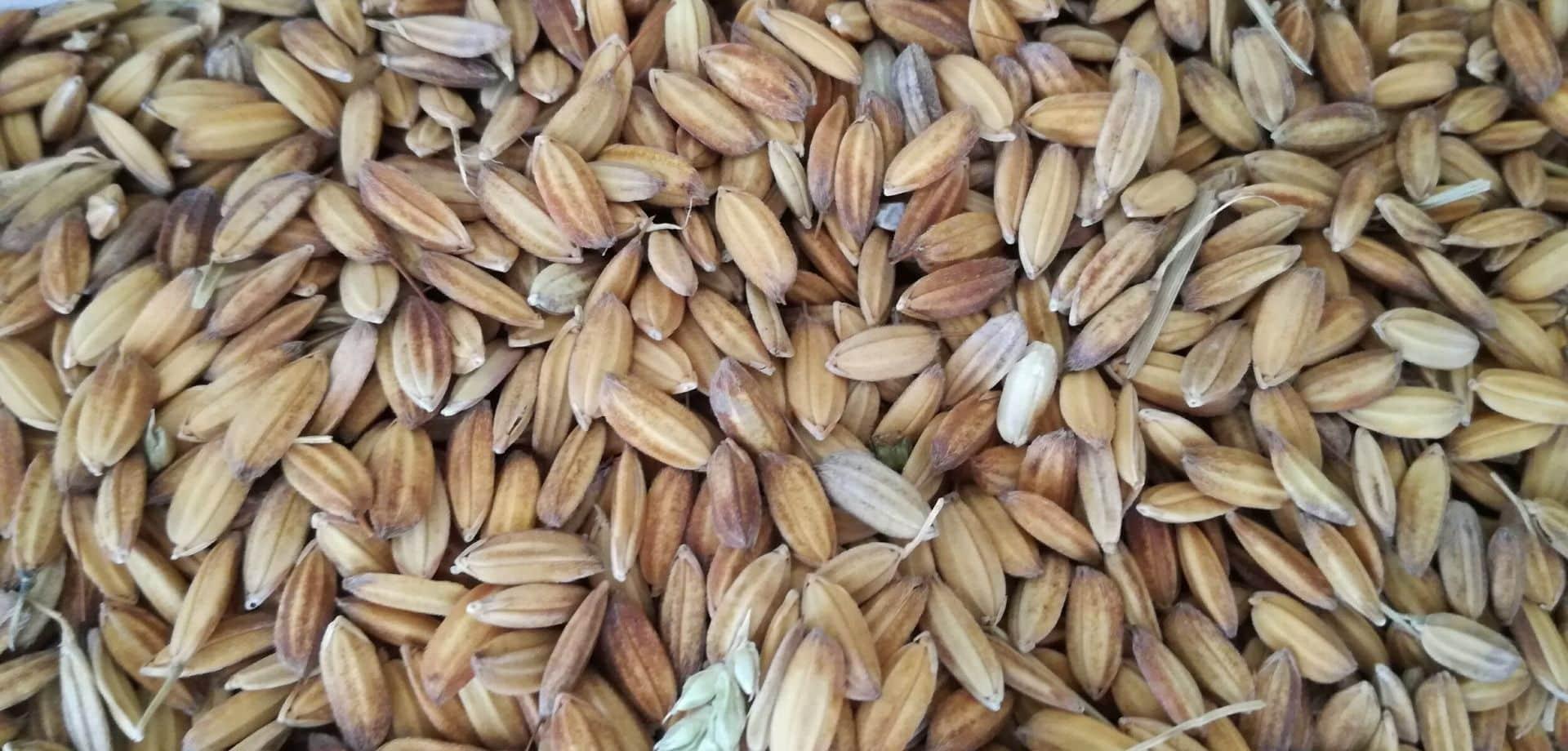 Scopriamo la lavorazione del riso italiano