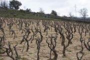 vitigni autoctoni sardi