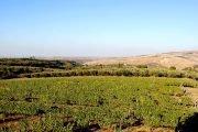 aglianico vino