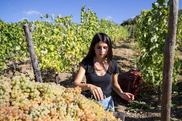 vino caratteristiche