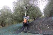 attrezzi per raccolta olive