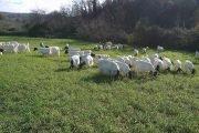 fattoria didattica roma
