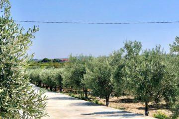 monti siciliani
