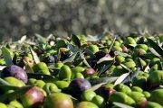 come fare le olive
