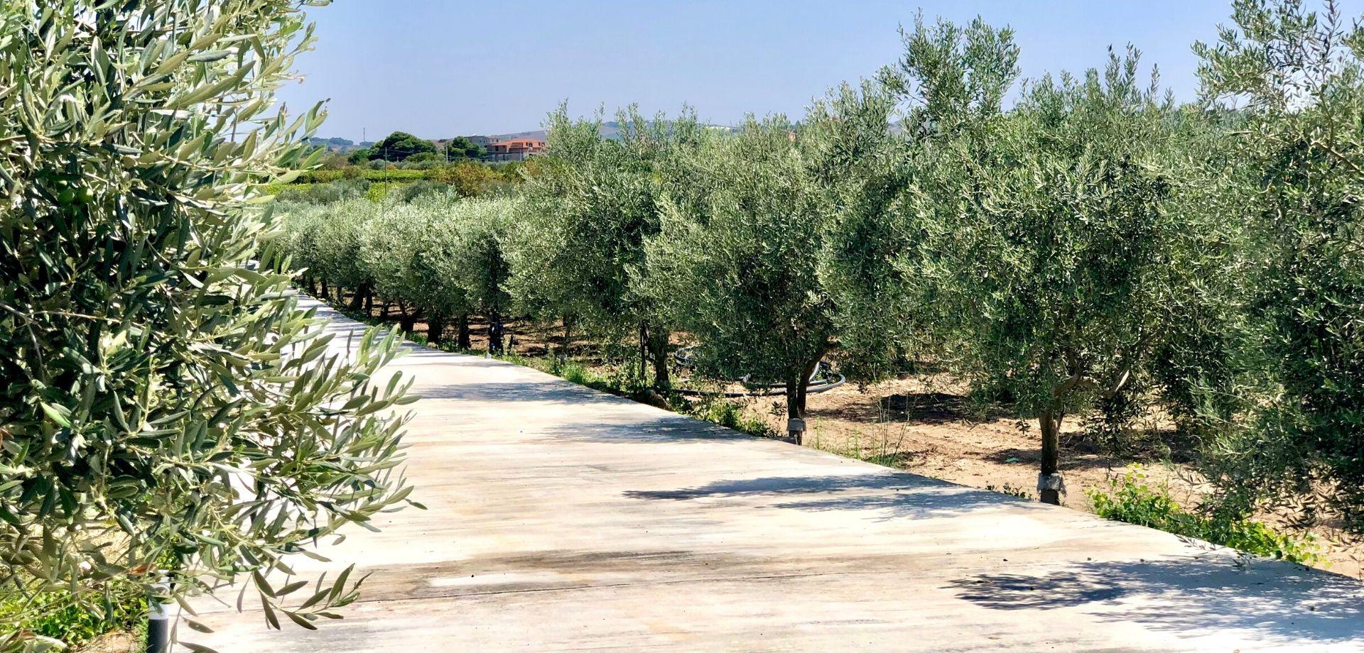 Degustazione guidata di olio siciliano