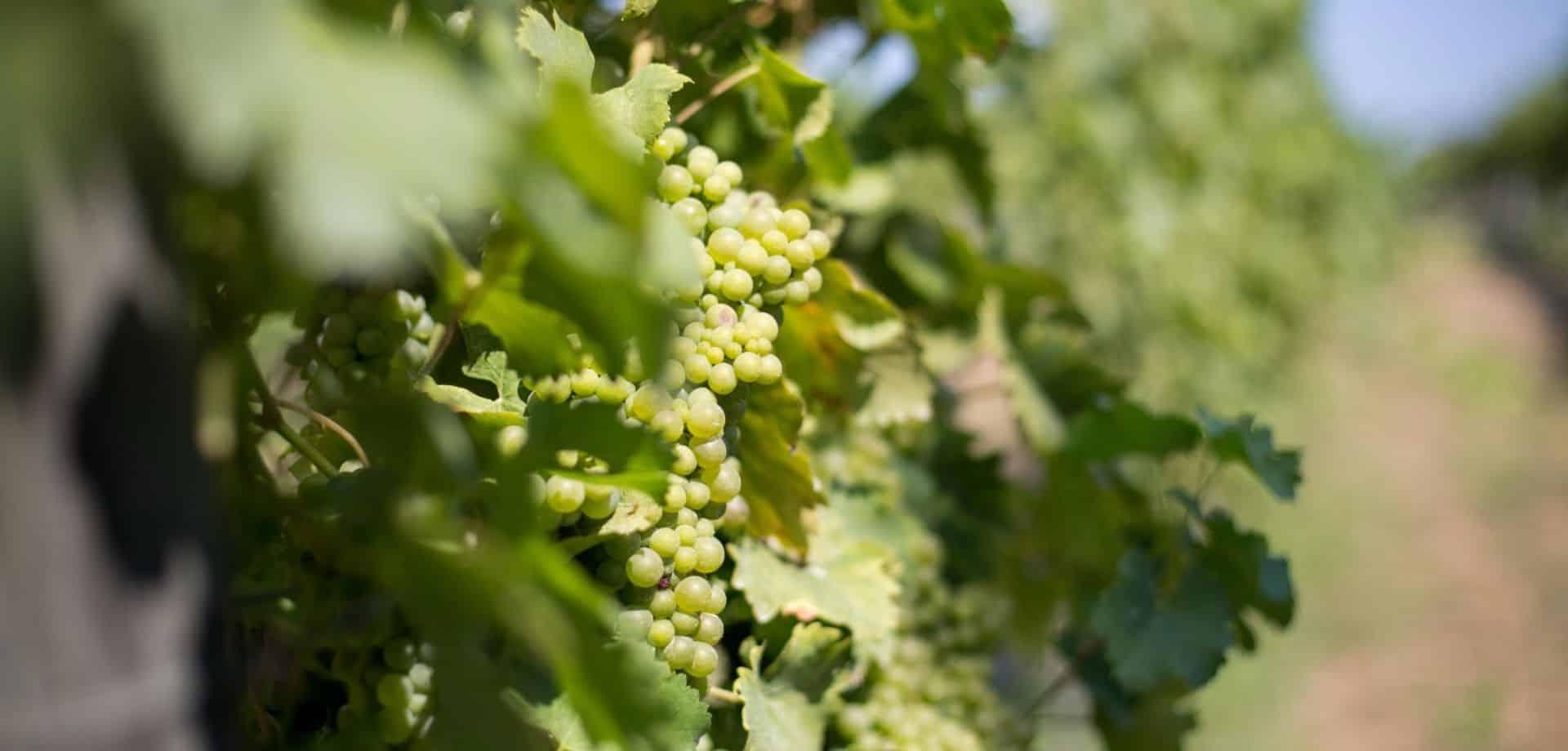 Degustare vini sul Lago di Bracciano