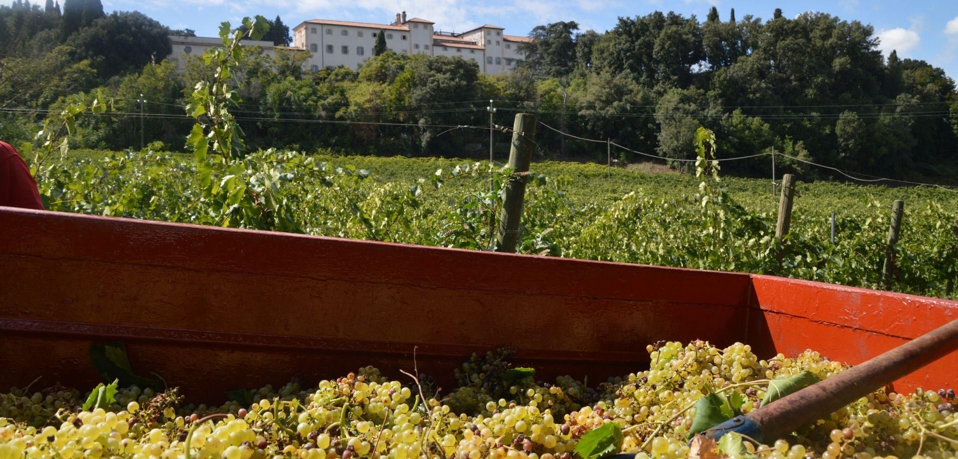 Vini del Lazio in degustazione a Frascati