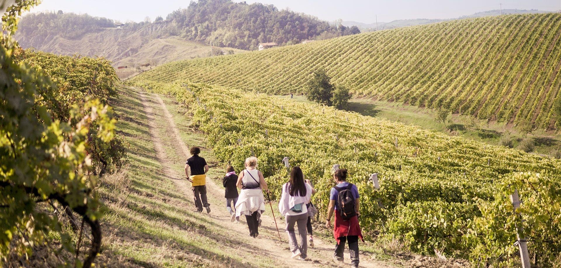 Wine trekking fra i vigneti toscani