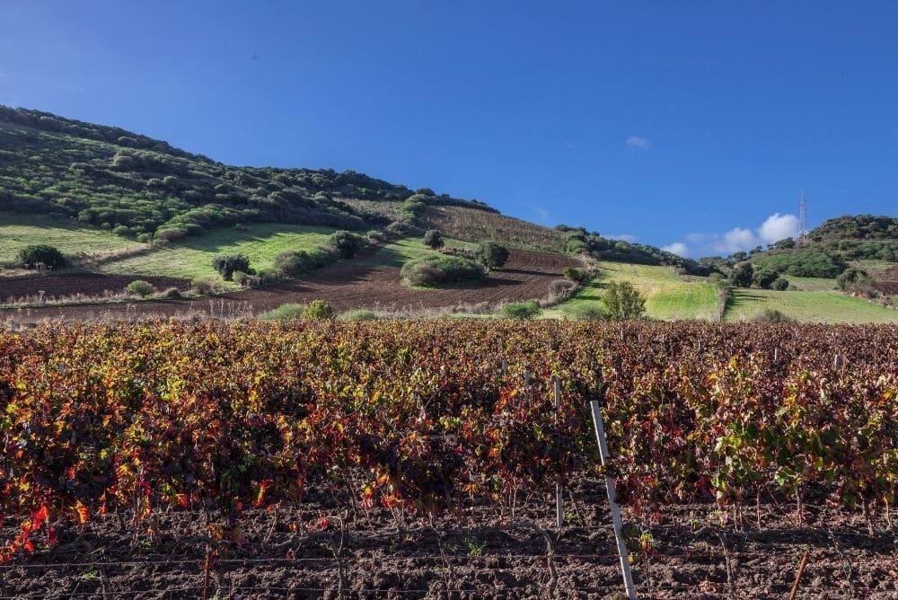 vini bianchi della sardegna