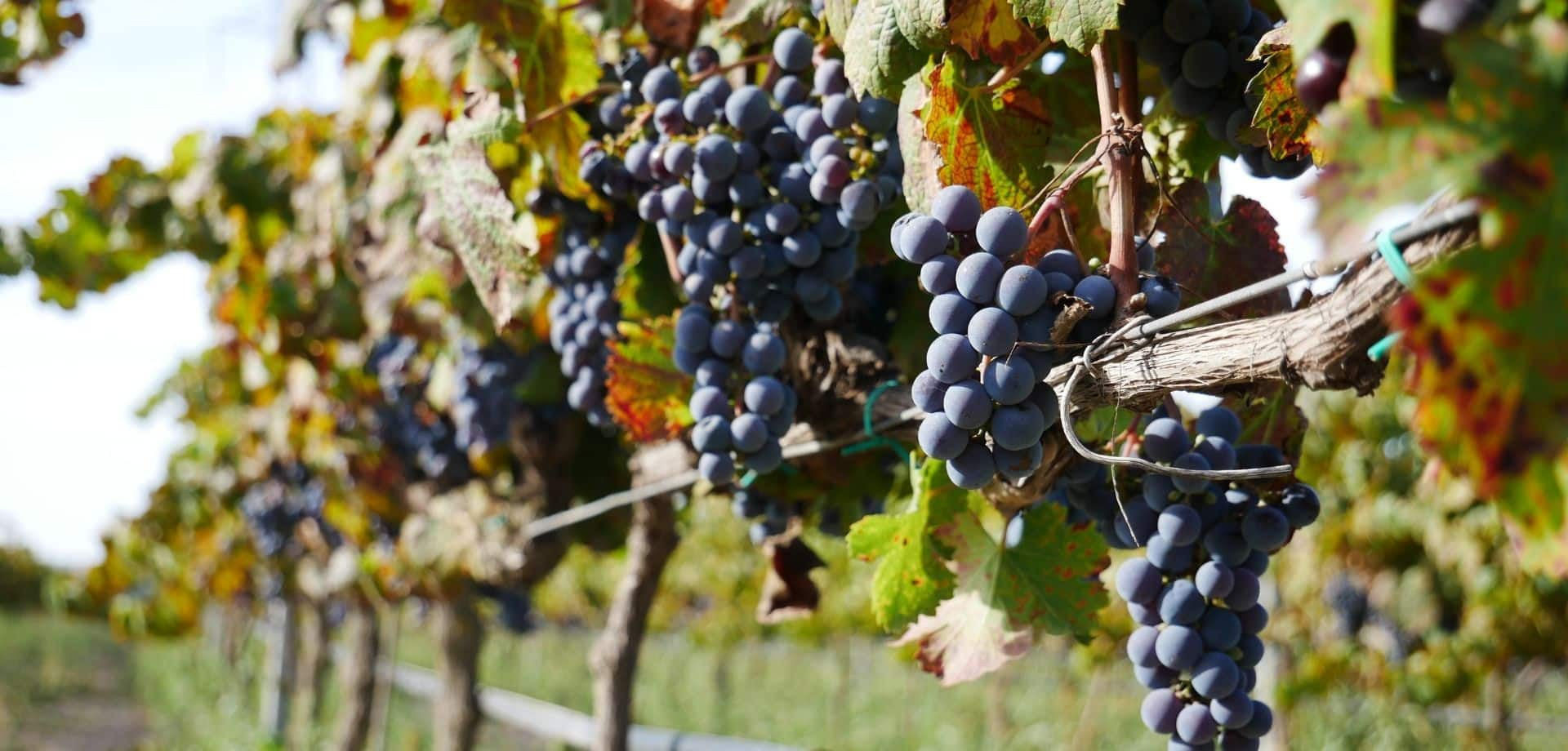 Gusta vini biologici siciliani a Marzamemi