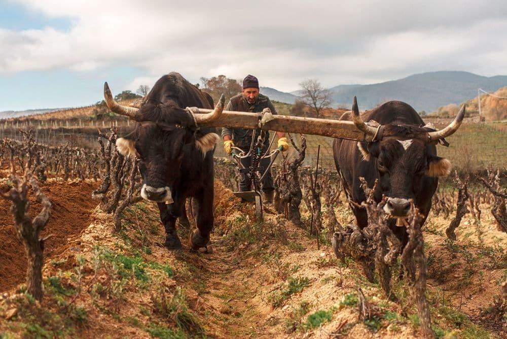 vino bianco della sardegna
