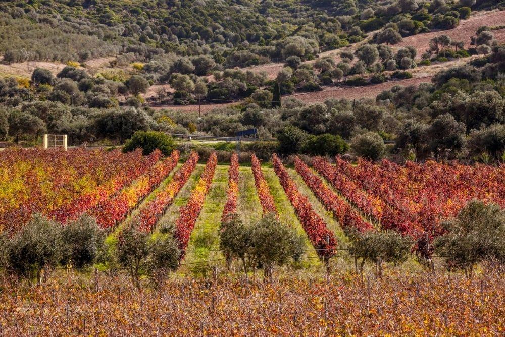 vino bianco sardegna