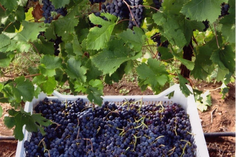 vini rossi veronesi