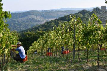 aziende vinicole umbria