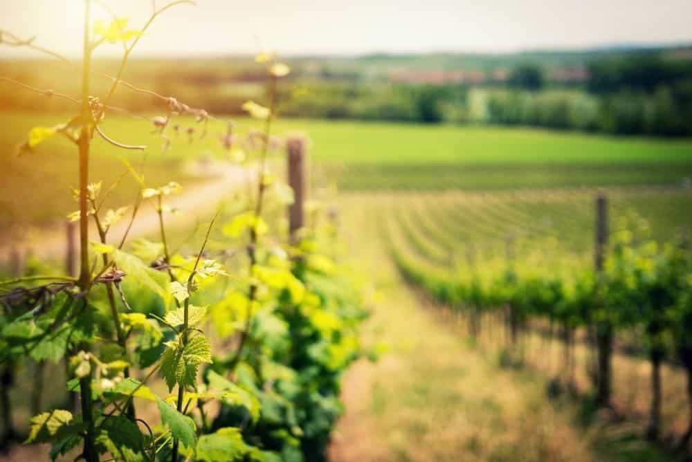 winery italy