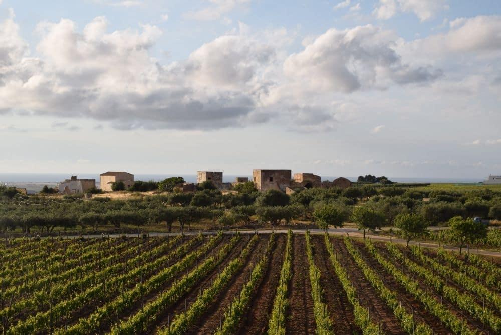 marsala winery