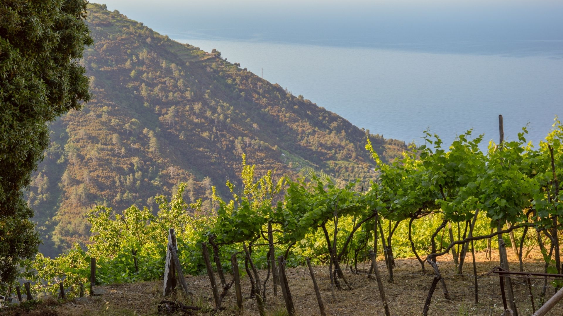 wine trekking